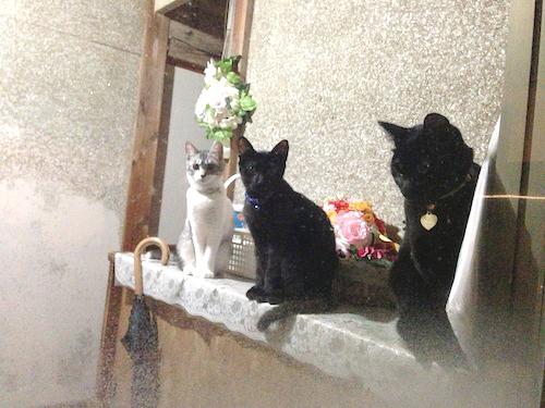 cats068.jpg