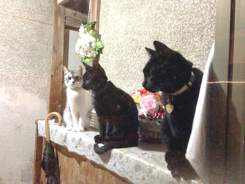 cats069.jpg