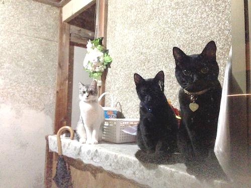 cats070.jpg
