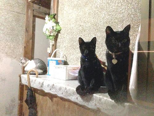cats071.jpg