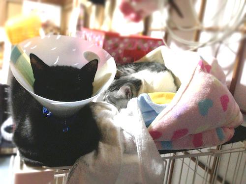 cats074.jpg