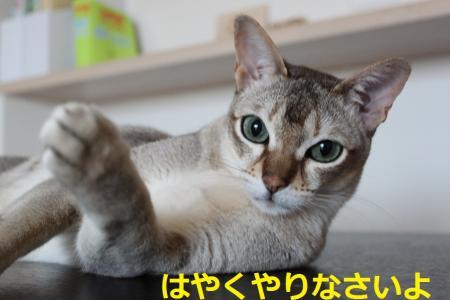 IMG_7961_convert_20120912114543.jpg