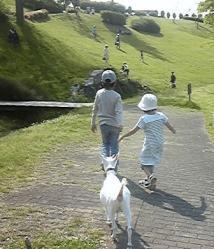 やぎのお散歩④