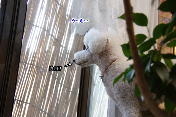 窓を開けたら3
