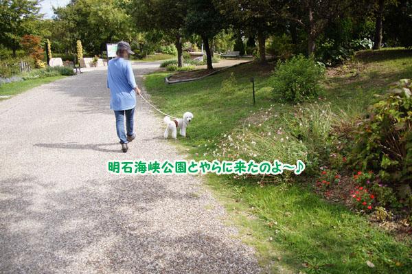 淡路島の旅♪ その2 公園編4