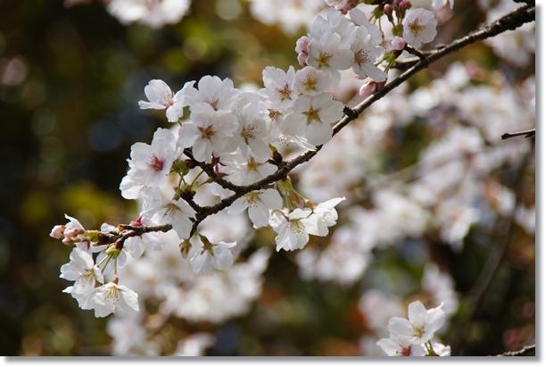 春の到来2