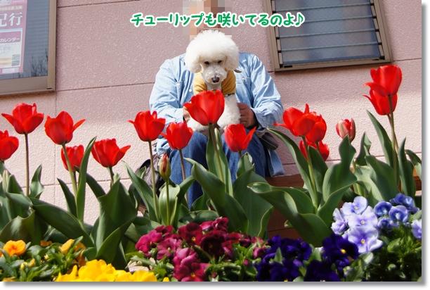 春の到来4