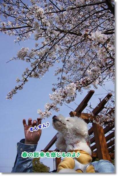 春の到来6