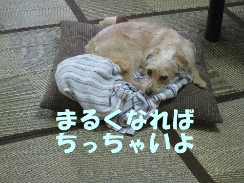 fukum121129_4P.jpg