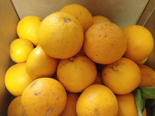 marmalade2013_2.jpg