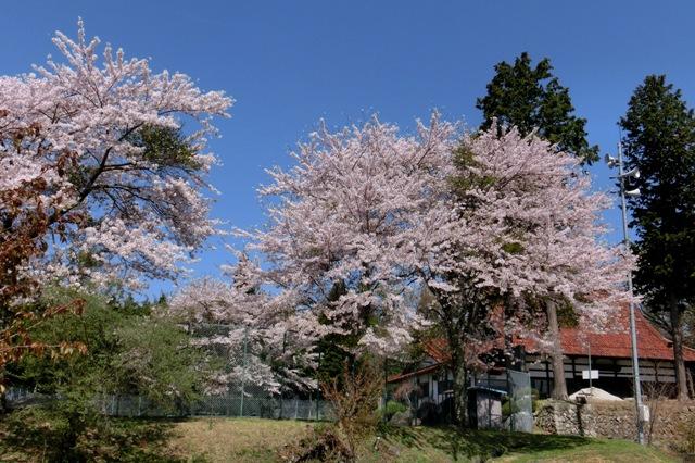 常昌寺(先達公民館)と桜
