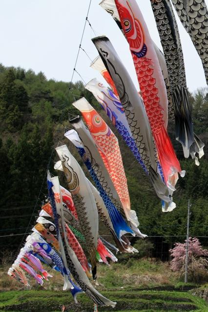 元気に泳ぐ鯉のぼり(道の駅南きよさと)