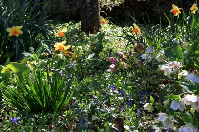 自然を活かしたワイルドな庭