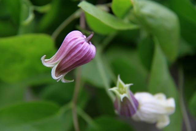 壷型の切り花