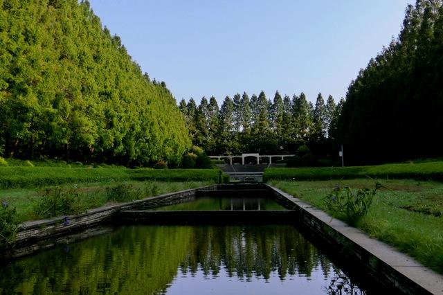 静寂のメタセコイア並木