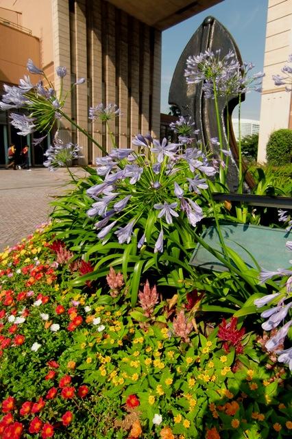 カラフルな夏花壇