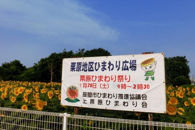 栗原地区ひまわり広場