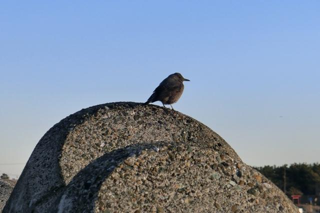 テトラポットにとまった小鳥