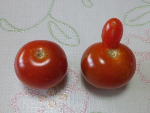 ミニトマト変わり種