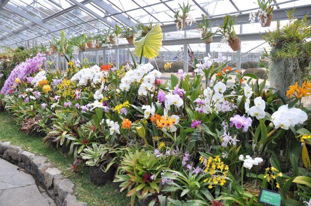 130210flower center02