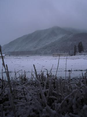 裏山(2012年12月)