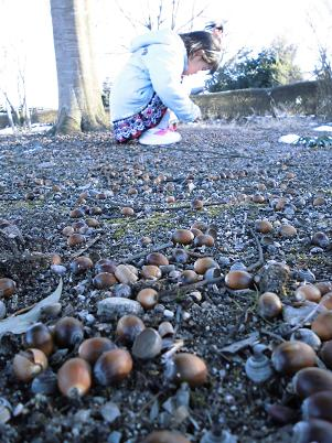 ニジマスのいる公園でどんぐり拾い(2013年1月)