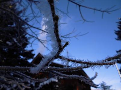 霧氷(2013年1月)