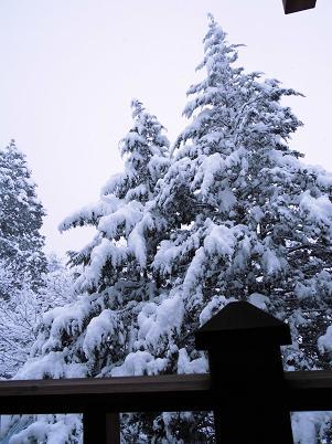 湿った雪(1013年1月)