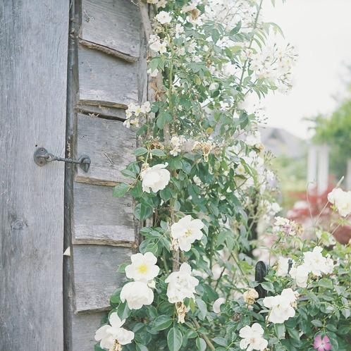 shio_薔薇園1