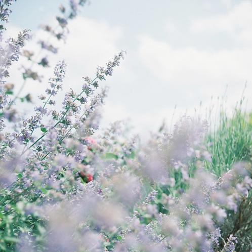 shio_薔薇園