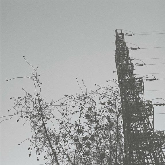 shio_コスモスと鉄塔