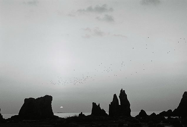 shio_朝陽、鳥