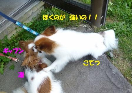 こてちゃん・凛-7