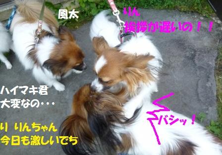 凛+ハイマキ