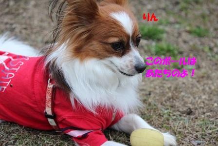 りん+ボール