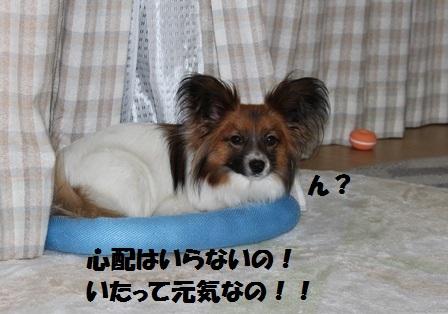 IMG_4961.jpg