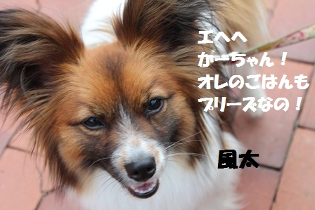 IMG_5212_20120529202229.jpg