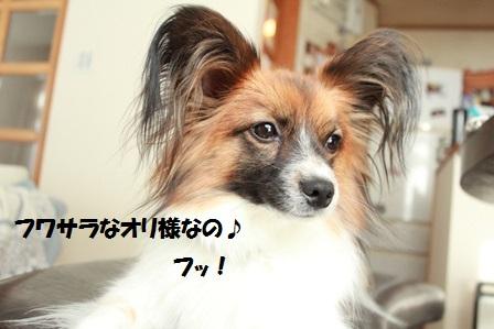 IMG_7283.jpg
