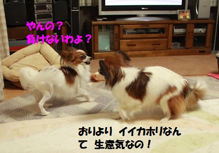 IMG_7569.jpg