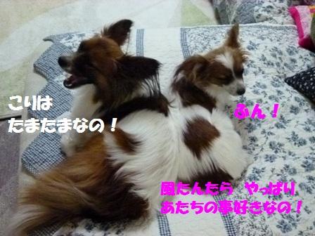 P1150627_20120524174207.jpg