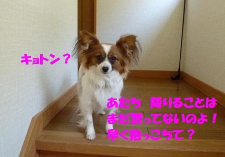 P1180542.jpg