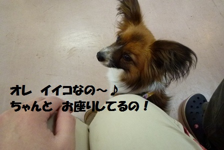 P1190213.jpg