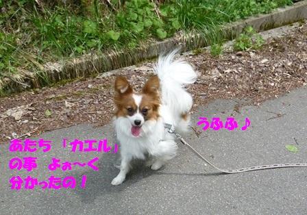 P1190458.jpg