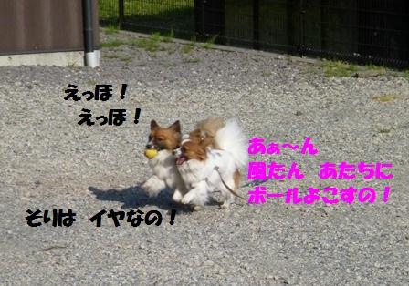 P1190507.jpg