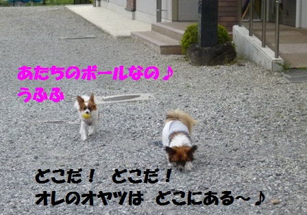 P1190572.jpg