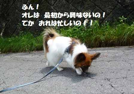 P1200802_20120617182904.jpg