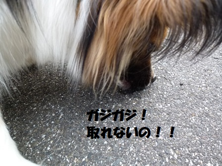 P1210243.jpg