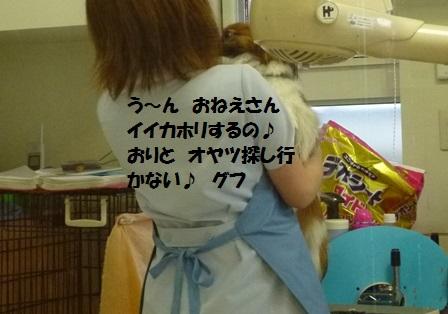 P1260153.jpg