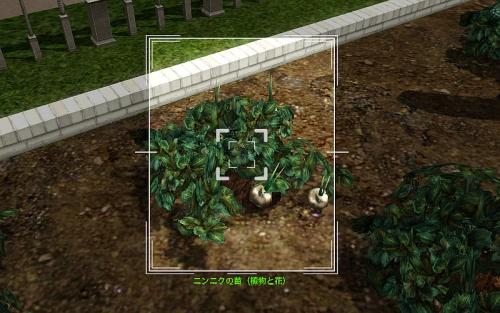 camera_Garlic Plant