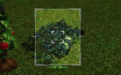 camera_Lettuce Plant